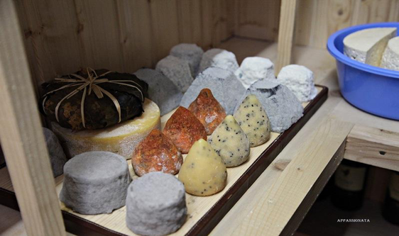 16 types of author's cheeses